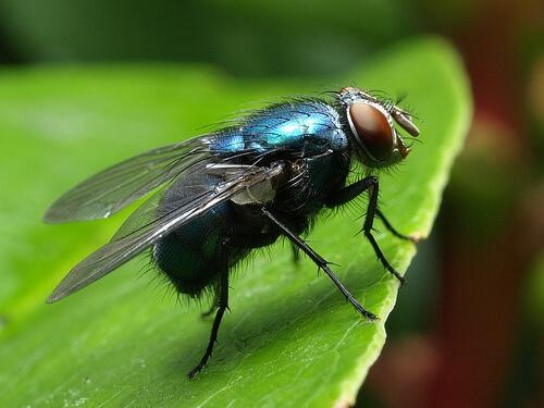 Dedetizadora de moscas no Rio de Janeiro